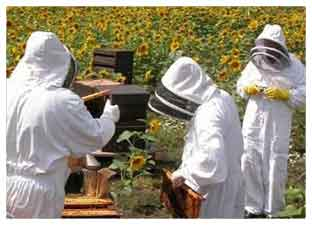 beekeeping day out