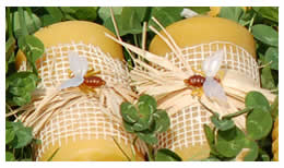 Beeswax Candles from The Wiltshire Beekeeper